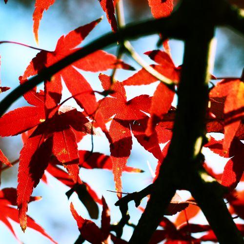 紅葉1.jpg